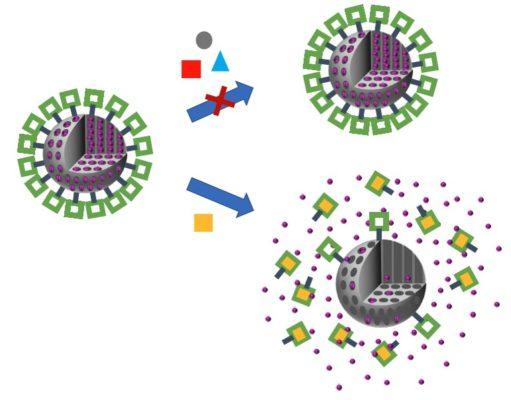 Amplificación mecánico-acústica mediante nanoestructuras funcionalizadas. // Mechanic-acoustic amplification by using functionalized nanostructures.